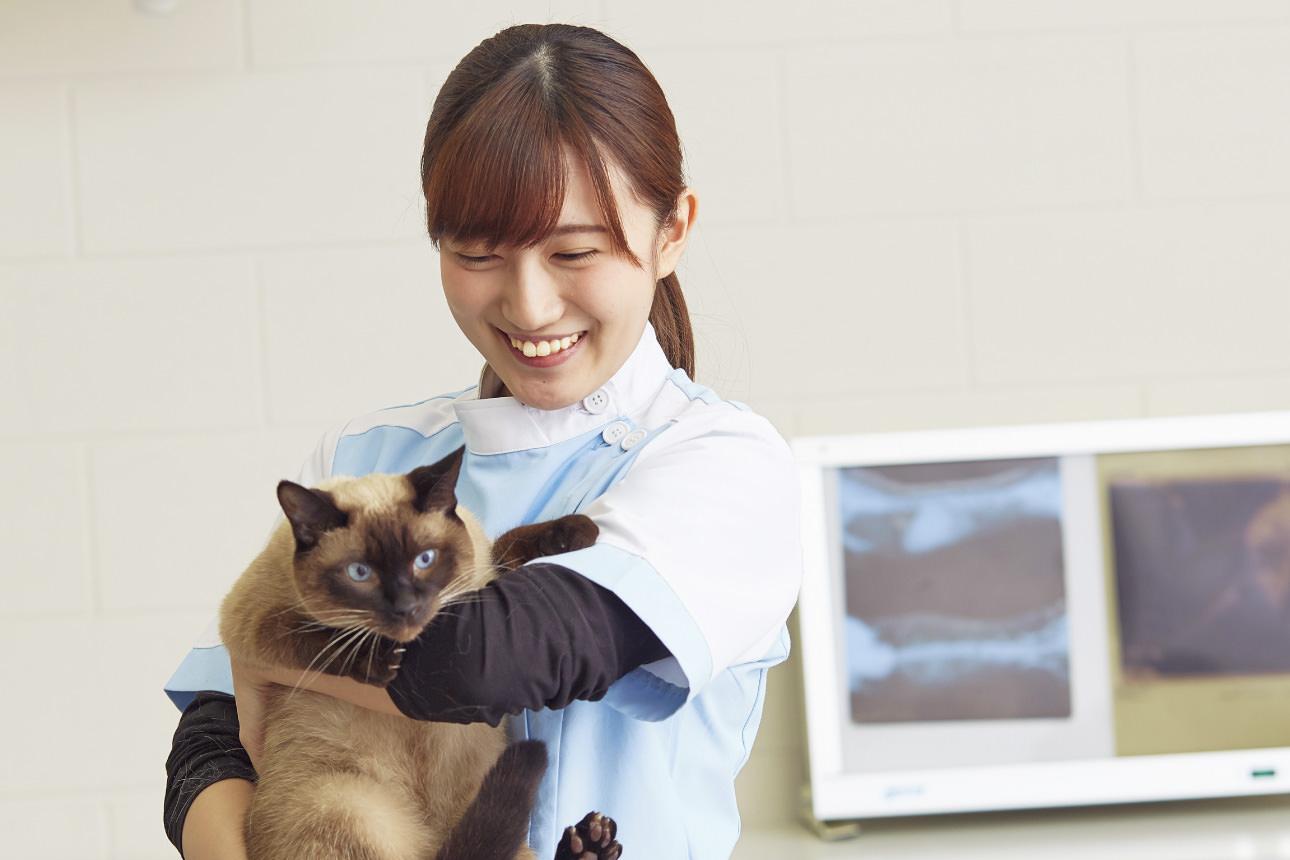 動物 看護 師 動物看護士と動物看護師の違いについて。動物看護士の活躍の場: