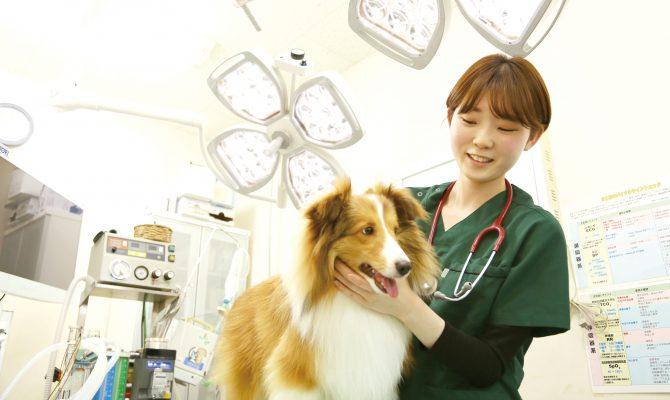 動物病院で活躍する動物看護師の卒業生をインタビュー!