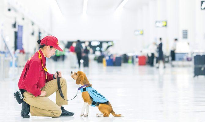 成田空港検疫探知犬ハンドラーとして活躍する卒業生!